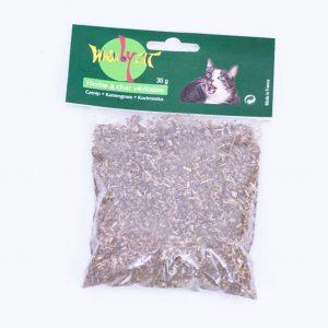 herbe à chat véritable